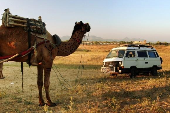 dnd_camel