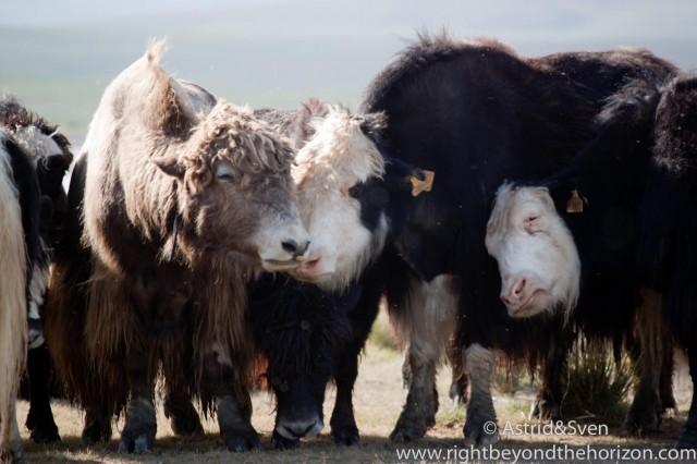 Mongolia-8
