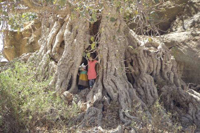 Kids in the tree b