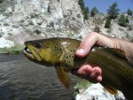 20 Inch Hot Creek Brown2.jpg