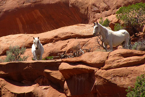 Undomesticated Equines