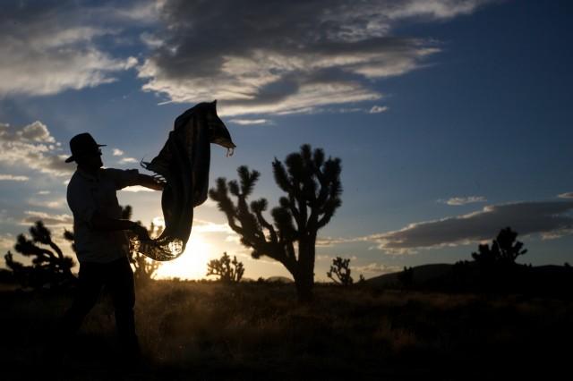 Mojave 007