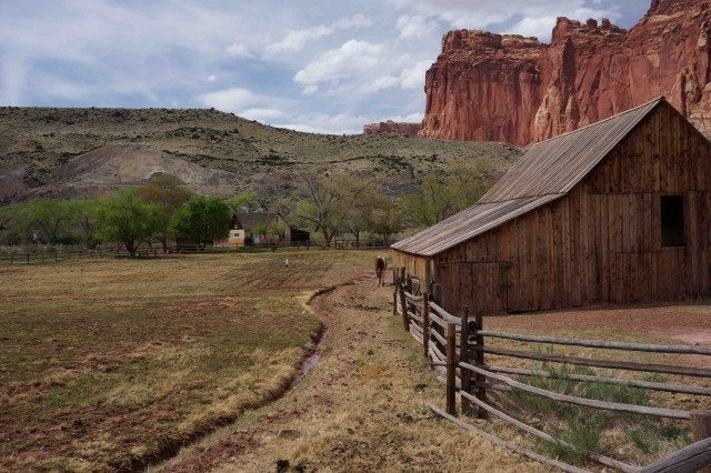 CR1-The old Fruita homestead is a major attraction in Capitol Reef NP