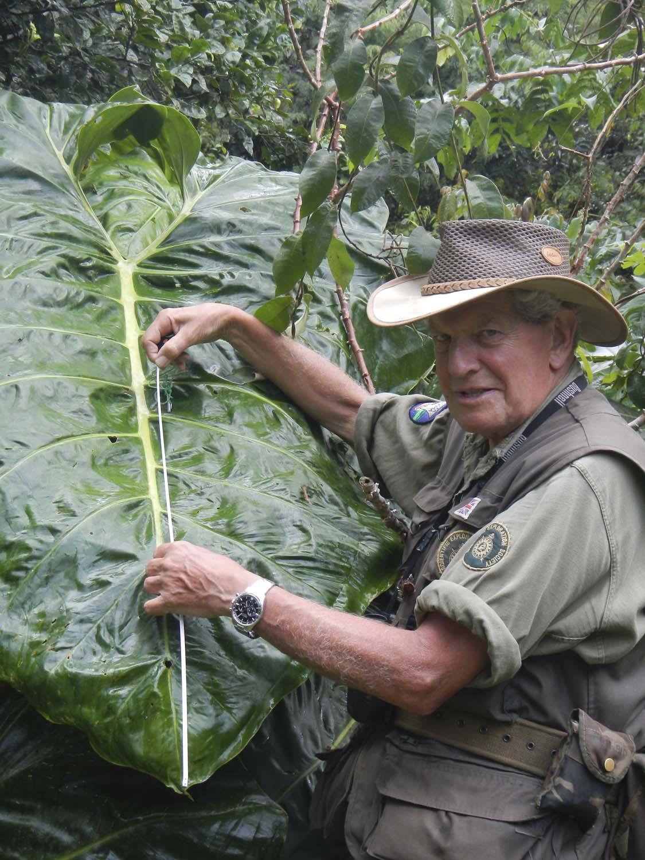 JBS measuring giant leaf _ Ecuador