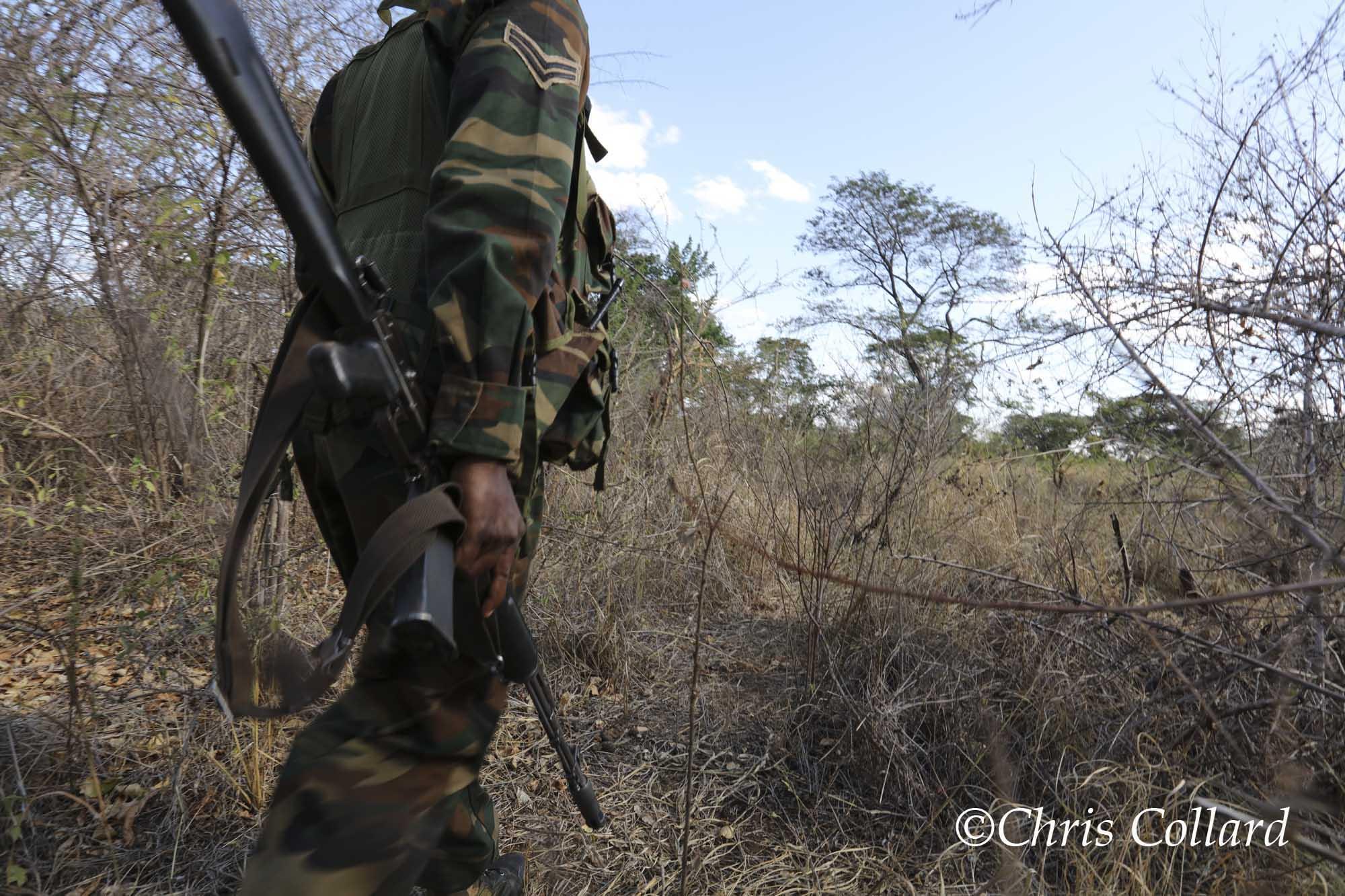 2015 Collard -  Kenya 004