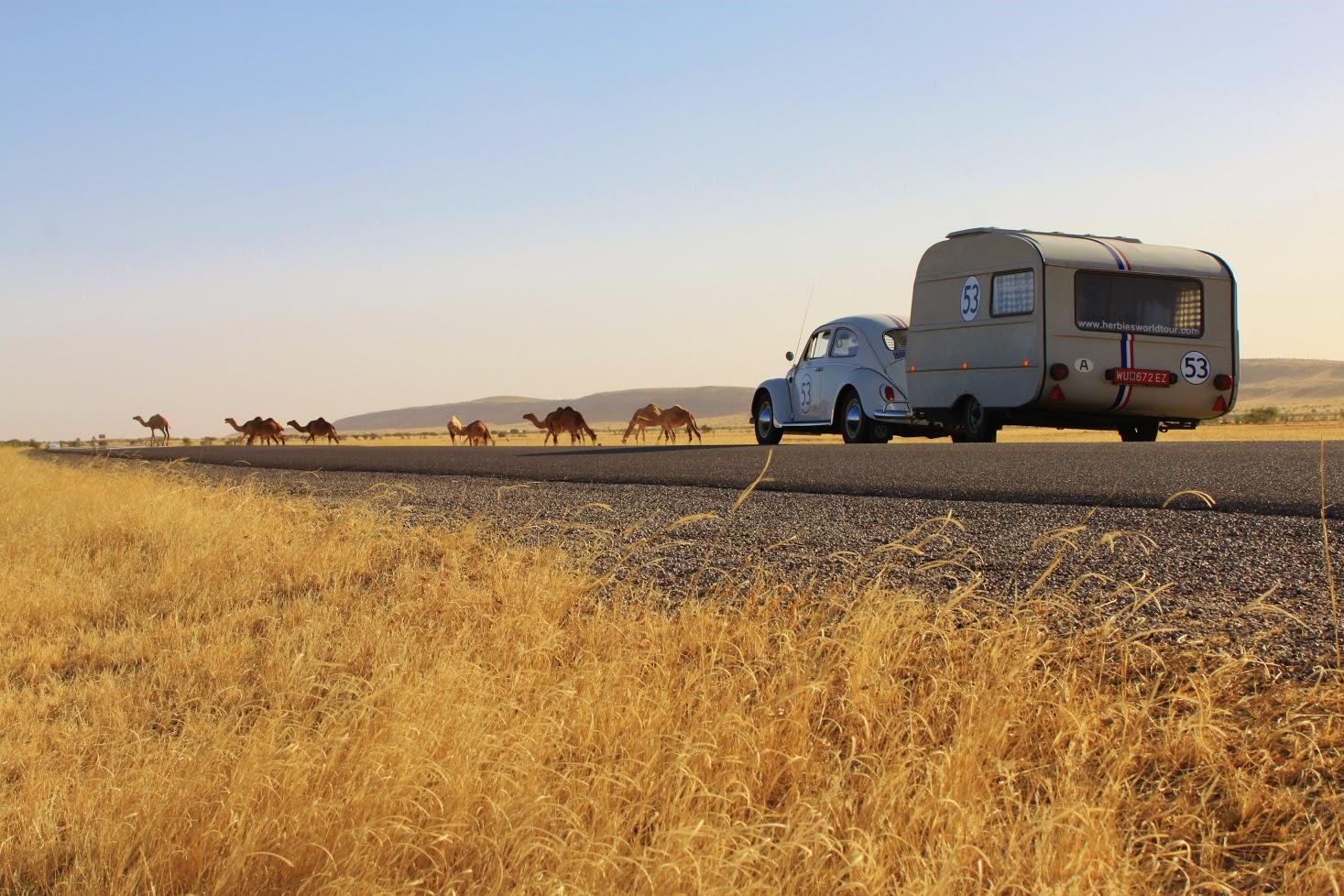 MAURITANIA Camels 2