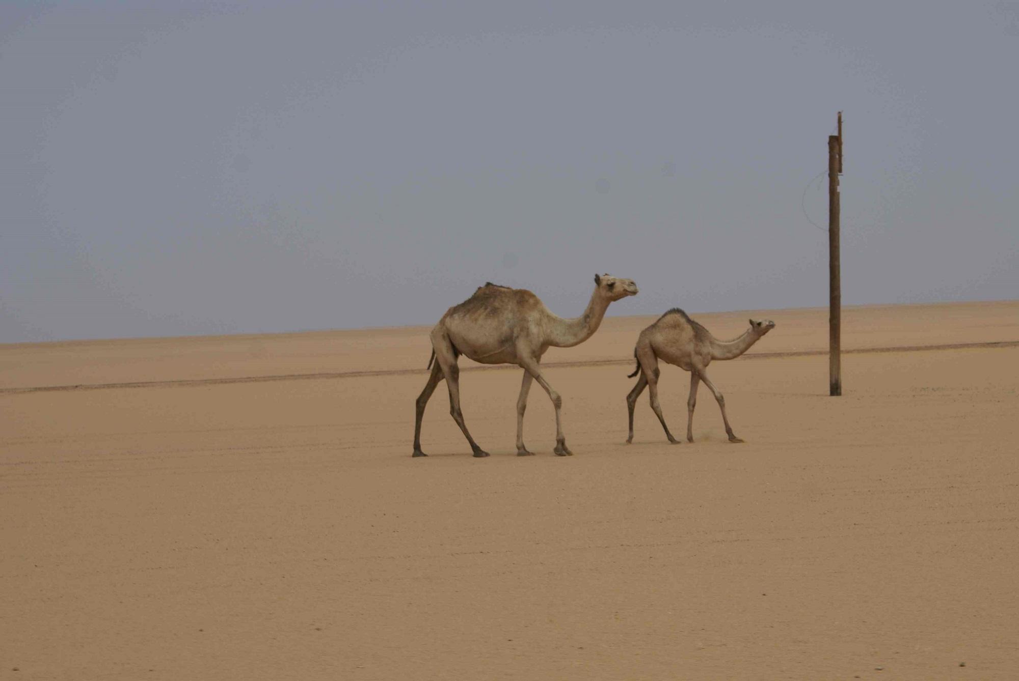 2014-CMCPHERSON-SUDAN-32