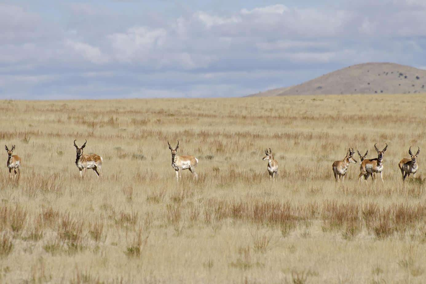 137 - Plains of San Agustin - Antelope (Copy)