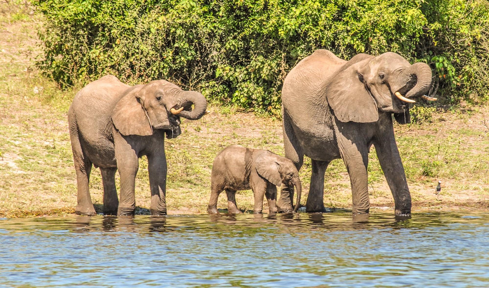 Chobe NP Botswana