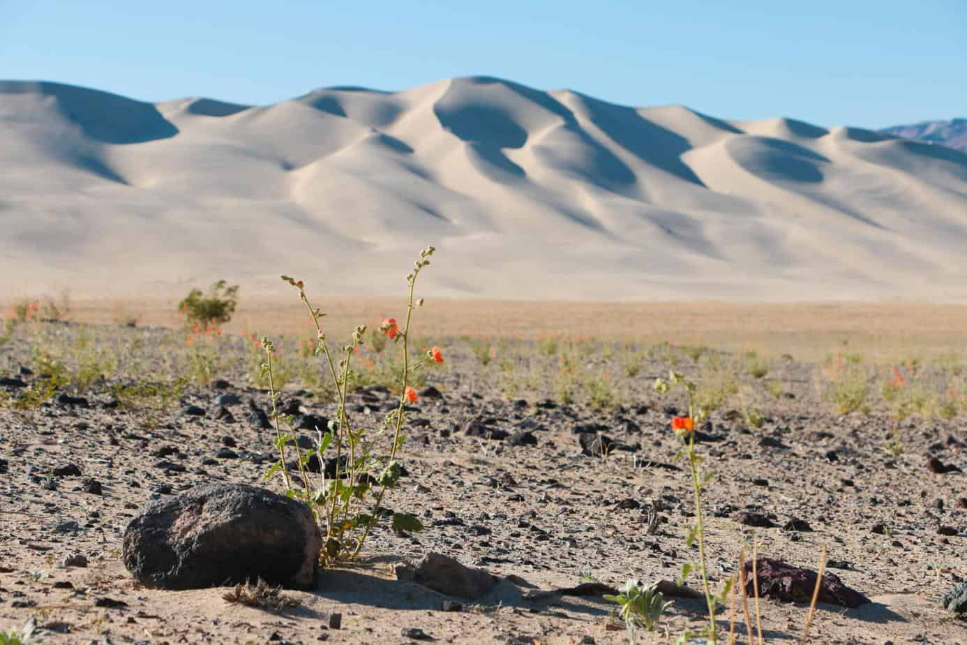 Death valley OJ42 (Copy)