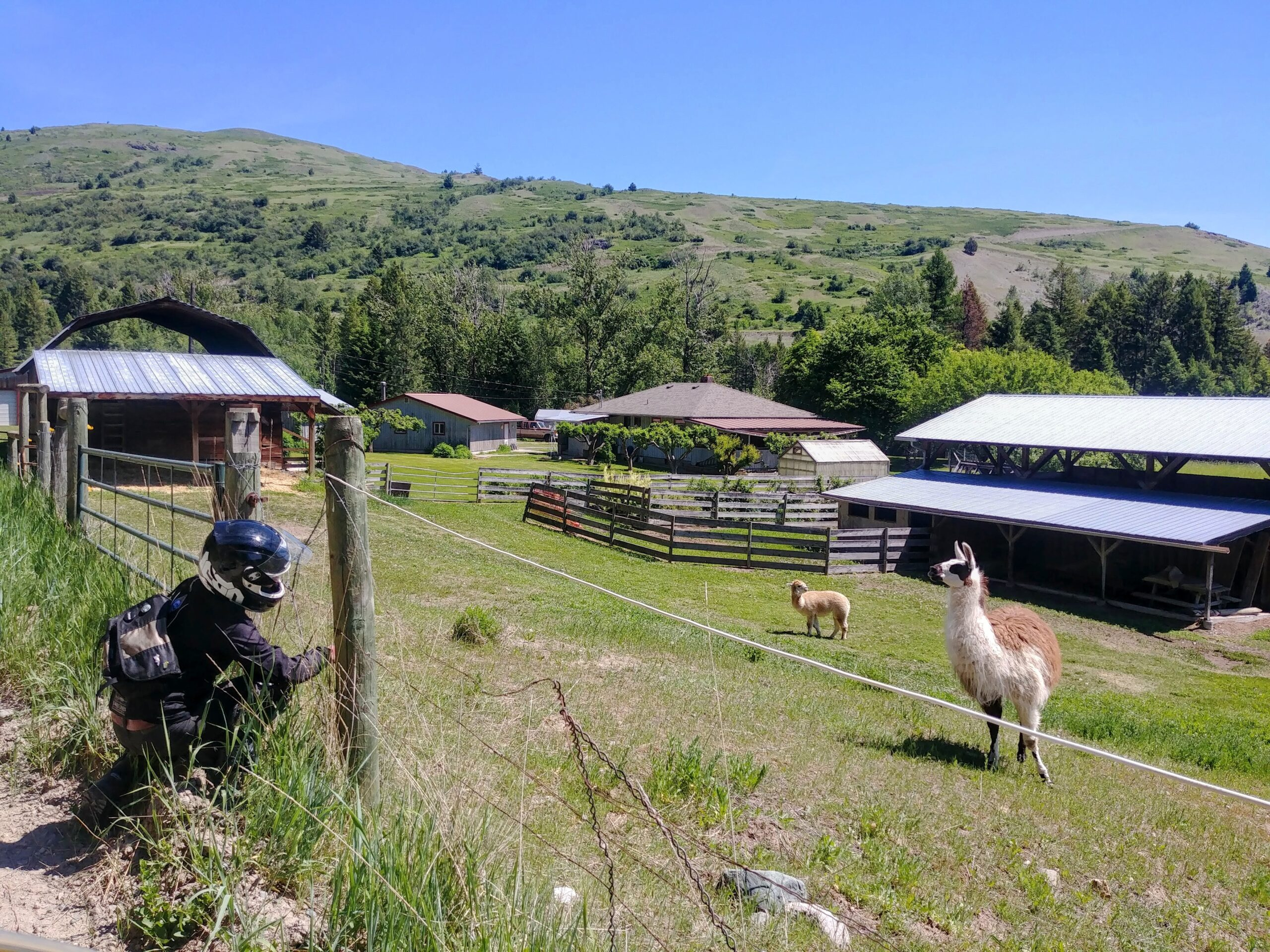 alpaca farm in british columbia