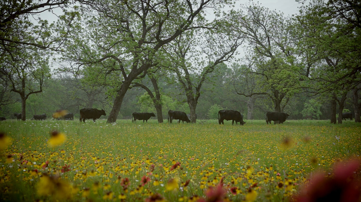 texas hill country residents