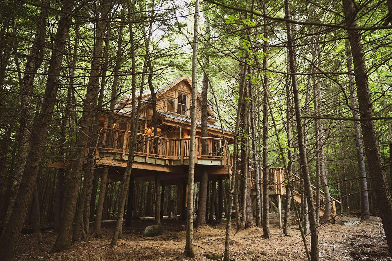 woods treehouse